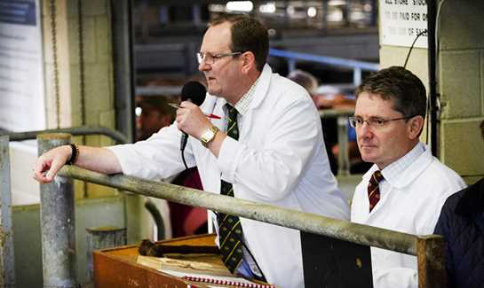 Frome Livestock Auctioneers Sale Preview